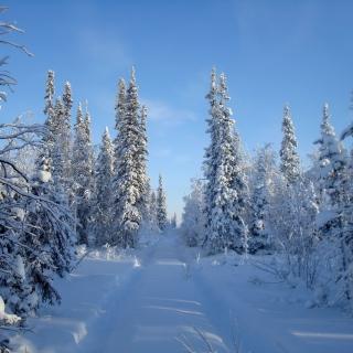 Snowy winter - Obrázkek zdarma pro iPad 3