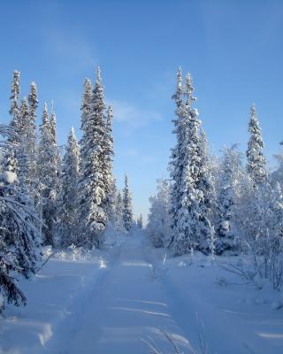 Snowy winter - Obrázkek zdarma pro 480x640