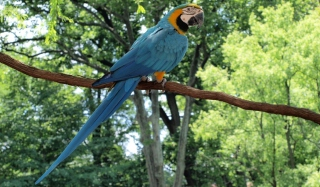 Macaw Picture for Android, iPhone and iPad
