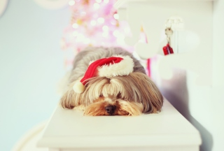 Free Christmas Puppy Picture for Android, iPhone and iPad