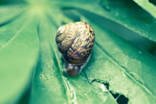 Snail On Plant Background for Android, iPhone and iPad