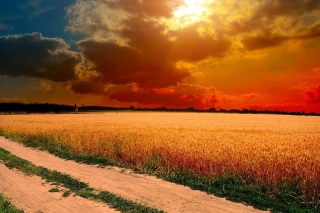 Free Field Sunset Picture for Android, iPhone and iPad