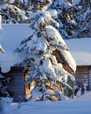 Spruce In Snow - Obrázkek zdarma pro Nokia Lumia 820