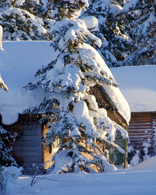 Spruce In Snow - Obrázkek zdarma pro 360x400