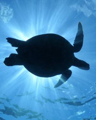 Turtle near Maldives - Obrázkek zdarma pro Nokia Lumia 925