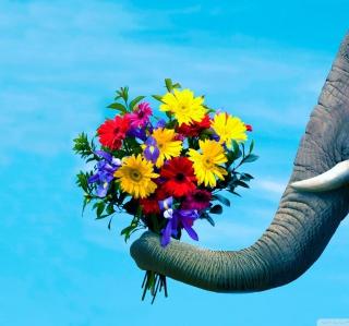 Elephant's Gift - Obrázkek zdarma pro 2048x2048