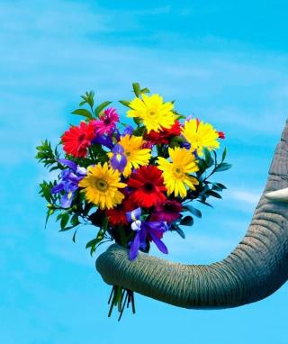 Elephant's Gift - Obrázkek zdarma pro iPhone 4S