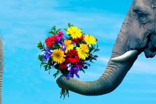 Elephant's Gift - Obrázkek zdarma pro 1680x1050