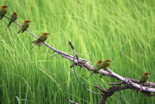 Обои Red Headed Birds для телефона