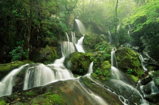 Tropical Forest Waterfall Wallpaper for Android, iPhone and iPad