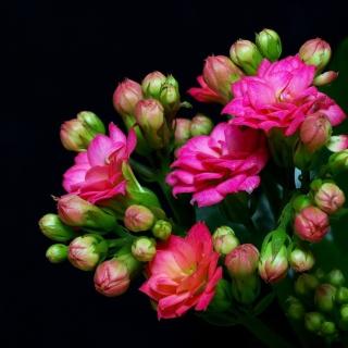 Masterpiece Floral - Obrázkek zdarma pro 1024x1024
