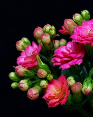 Masterpiece Floral - Obrázkek zdarma pro 176x220