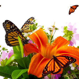 Lilies and orange butterflies - Obrázkek zdarma pro 320x320