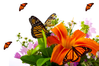 Lilies and orange butterflies - Obrázkek zdarma pro Widescreen Desktop PC 1920x1080 Full HD