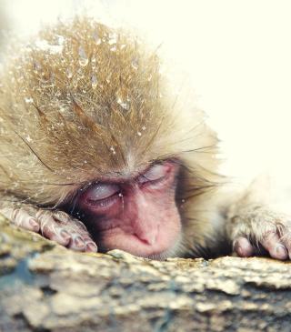 Japanese Macaque Sleeping Under Snow - Obrázkek zdarma pro 132x176