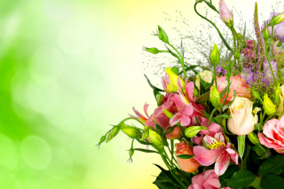 Calla Lily Bouquet Background for Android, iPhone and iPad