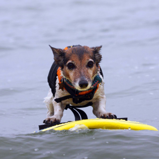Surfing Puppy - Obrázkek zdarma pro 320x320