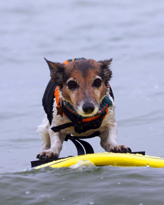 Surfing Puppy - Obrázkek zdarma pro 360x480