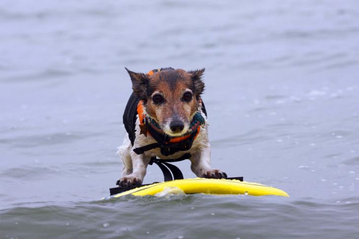 Surfing Puppy wallpaper