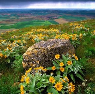 Wild Flowers And Rock - Obrázkek zdarma pro iPad 3