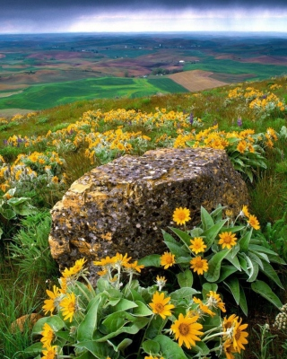 Wild Flowers And Rock - Obrázkek zdarma pro Nokia Asha 308