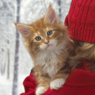 Cat Friend - Obrázkek zdarma pro 128x128