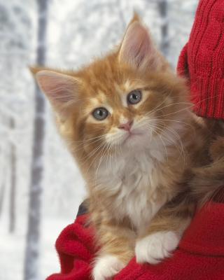 Cat Friend - Obrázkek zdarma pro 128x160