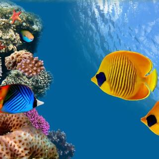 Maldives Coral Colony - Obrázkek zdarma pro iPad