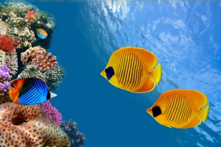 Free Maldives Coral Colony Picture for Android, iPhone and iPad