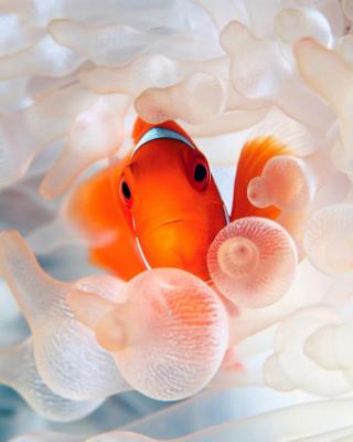 Orange Clownfish - Obrázkek zdarma pro Nokia Lumia 900