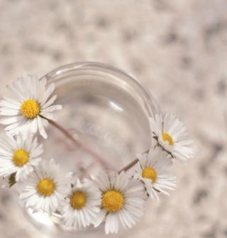 Little Daisies In Vase - Obrázkek zdarma pro 320x320