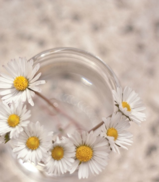 Little Daisies In Vase - Obrázkek zdarma pro Nokia C7