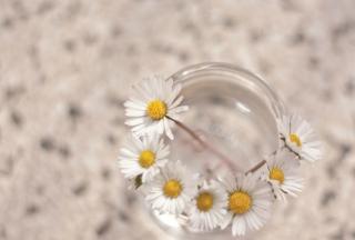 Little Daisies In Vase - Obrázkek zdarma pro 480x320