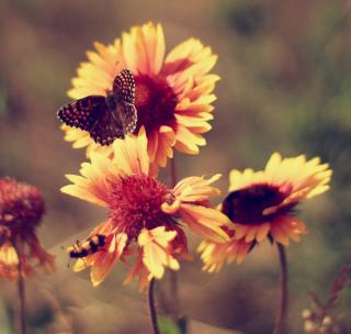 Marigold Flowers - Obrázkek zdarma pro 128x128