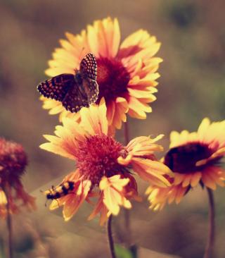 Marigold Flowers - Obrázkek zdarma pro Nokia X2