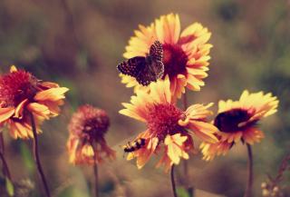 Marigold Flowers - Obrázkek zdarma pro Widescreen Desktop PC 1680x1050