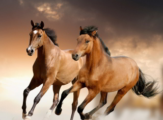 Horse Wallpaper for Android, iPhone and iPad