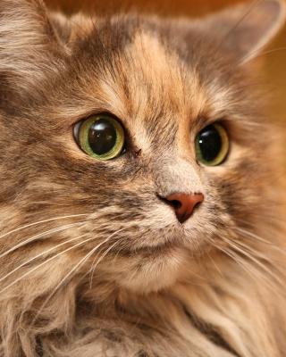 Fluffy cat - Obrázkek zdarma pro Nokia C6-01