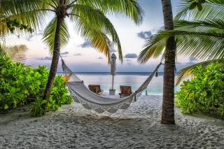 Hammock At Maldives Beach Picture for Android, iPhone and iPad