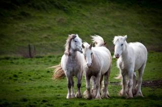 Картинка White Horses для андроид