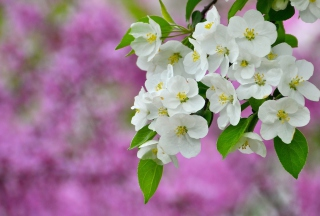 Free Beautiful Spring Blossom Picture for Android, iPhone and iPad