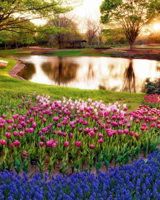 Tulip park on Mainau island in Baden Wurttemberg - Obrázkek zdarma pro Nokia Asha 303