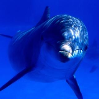Dolphin - Obrázkek zdarma pro iPad 3