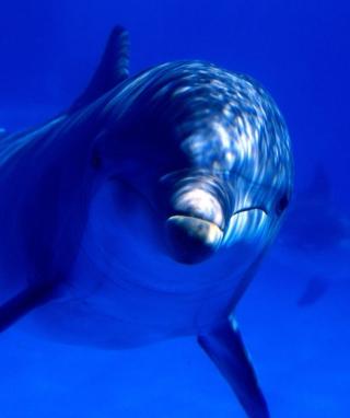 Dolphin - Obrázkek zdarma pro Nokia Asha 305