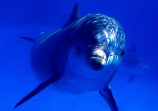 Dolphin - Obrázkek zdarma pro Fullscreen Desktop 1600x1200