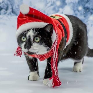 Winter Beauty Cat - Obrázkek zdarma pro 128x128