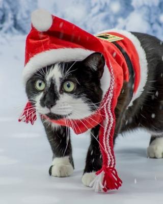 Winter Beauty Cat - Obrázkek zdarma pro Nokia Lumia 928