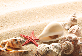 Seashells On The Beach - Obrázkek zdarma pro Widescreen Desktop PC 1680x1050