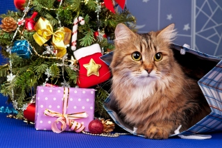 Merry Christmas Cards Wishes with Cat - Obrázkek zdarma pro 960x854