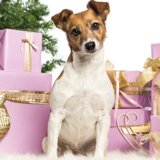 Jack Russell Terrier - Obrázkek zdarma pro iPad mini